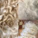 Wensleydale sheep locks in three stages of processing - washed, fluffed and being spun. White sheep's locks.