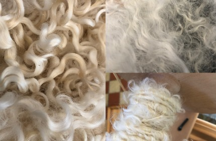 Wensleydale fleece in three stages: washed, fluffed and spun. Light white, shiny sheep's locks in process of being spun.