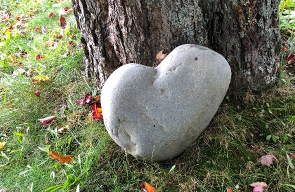Heart shaped grey rock leaning against a tree trunk. Green grass with some red, fall leaves.